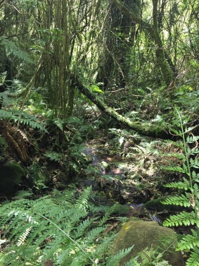 Sunlight penetrating through to one of Maungatautari's many streams (photo credit: Marcela Mendoza Suárez)