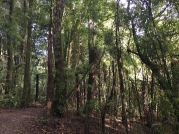 Inside the forest, a footpath provides members of the public relatively easy access to the Southern Enclosure (photo credit: Marcela Mendoza Suárez)
