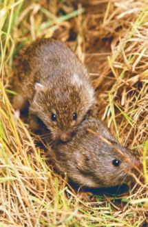 Trait–demography relationships underlying small mammal population fluctuations. van Benthem et al. http://doi.org/10.1111/1365-2656.12627