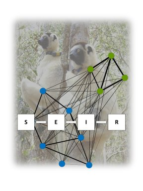 Dynamic vs. static social networks in models of parasite transmission: predicting Cryptosporidium spread in wild lemurs. Andrea Springer et al. http://doi.org/10.1111/1365-2656.12617