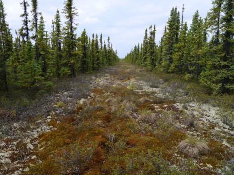 Fig 3 - Peatland predator highways - Craig DeMars