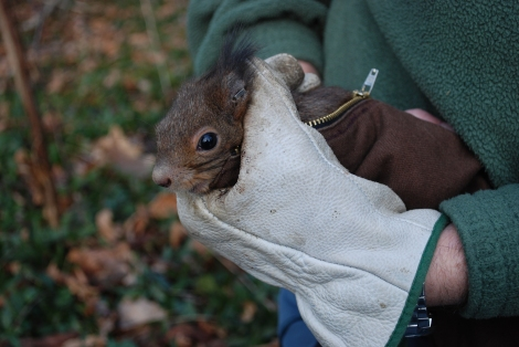 red squirrel handling_creditFrancesca Santicchia