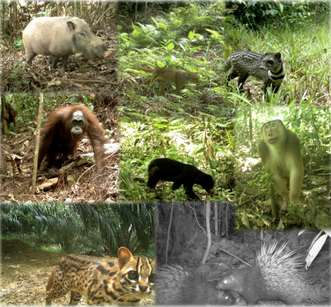 Fig 2 - Camera trap images