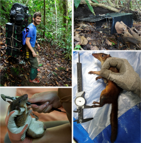 Fig 3 - Small mammal sampling