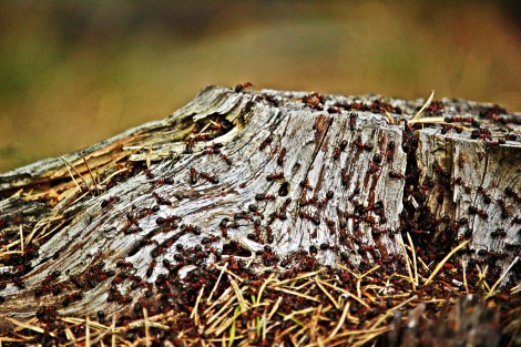 tree-stump-2293966_1920