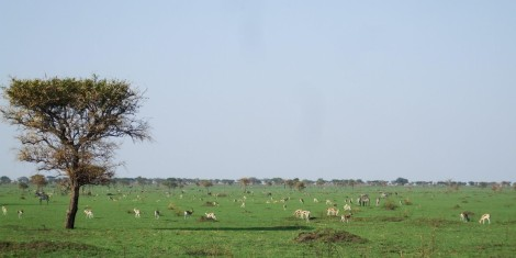 Serengeti c Colin Beale