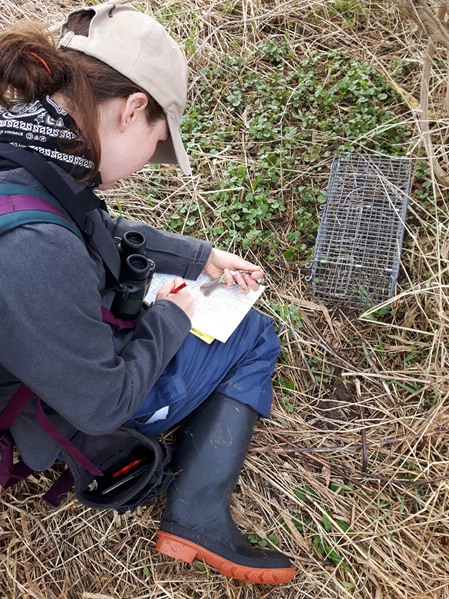 Researcher Leanne Grieves records data from a colour-banded song sparrow, holding the bird in her hand and writing in a notebook
