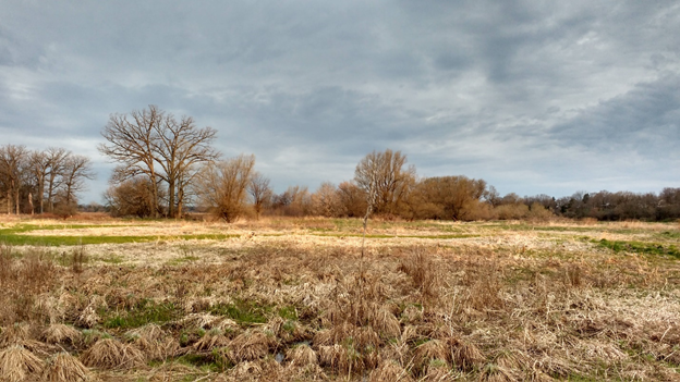 An open grassland habitat with some trees in the distance